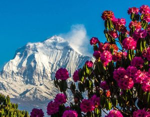Travel information of Nepal get updated with Himalmandap Blog